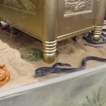 SDCC 2012: Preview night photos: Raiders of the Lost Ark: Ark of the Covenant full-sized model with LIVE snakes