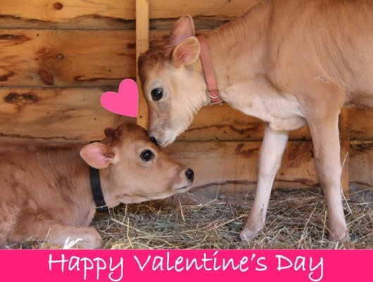 Catskill Animal Sanctuary Valentine's Day 2014