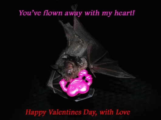 Valentine's Day Bat World ecard