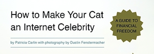 How to Make Your Cat an Internet Celebrity Banner