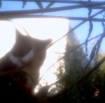 Cat Cam photo - Bird Feeder