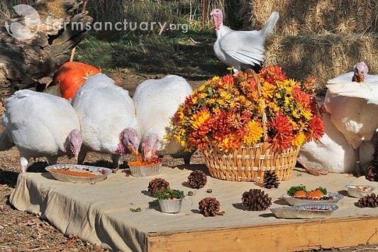 Farm Sanctuary Celebration FOR the Turkeys