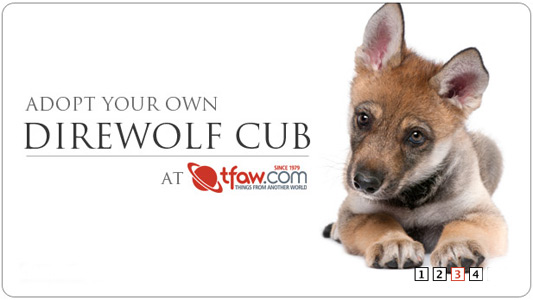 Direwolf Cub adoption