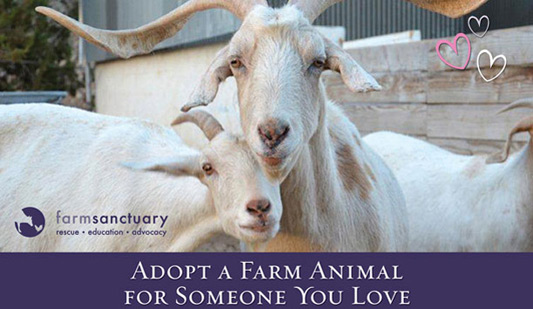 Sponsor A Farm Animal - Farm Sanctuary