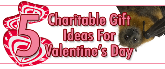 Charitable Gift Ideas For Valentines Day