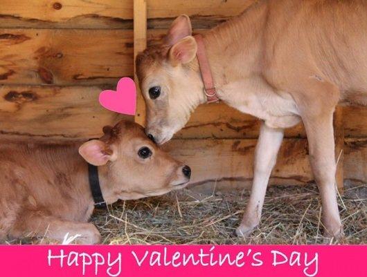 Catskill Animal Sanctuary Valentine's Day 2014