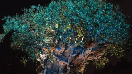 Blue Avatar Lights Twinkle On Disney World's Animal Kingdom Tree Of Life