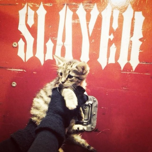 Slayer Rescue Cat From Indianapolis Street