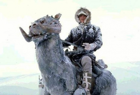 Star Wars The Empire Strikes Back Han Solo on Tauntaun