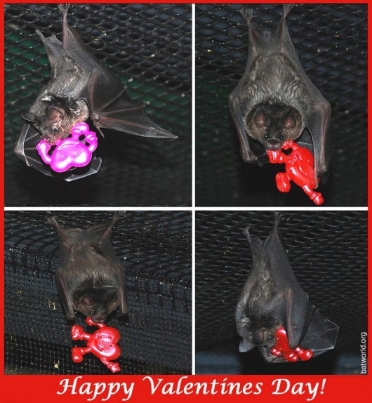 Bat World Valentine's Day