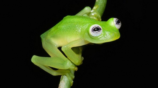 Real-Life Kermit the Frog