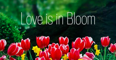 Central Park donation to plant flowers Valentine's Day