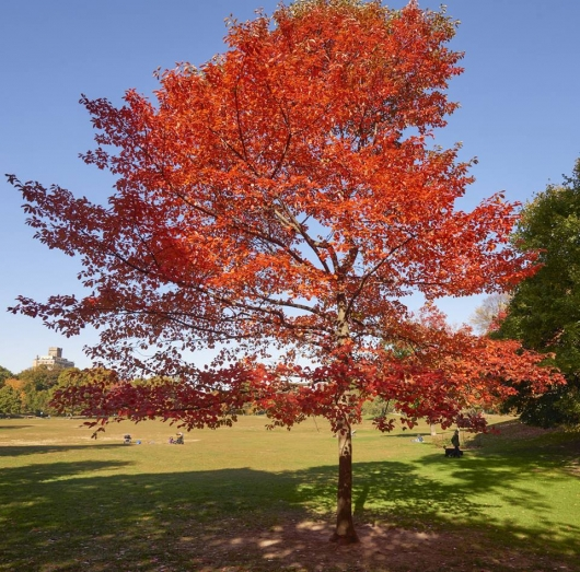 Prospect Park Plant a Tree Photo by Martin Seck