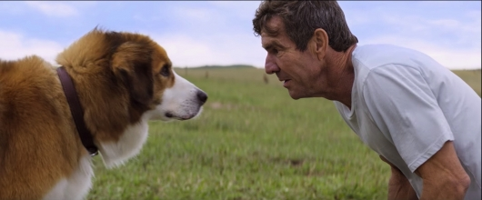 National Dog Day A Dog's Purpose