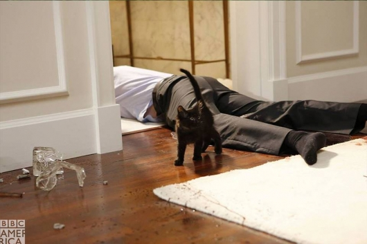 Dirk Gently black kitten crime scene