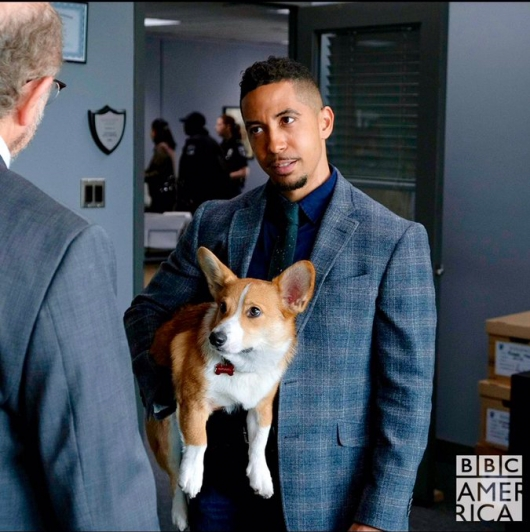 Dirk Gently Estevez and Rapunzel the corgi