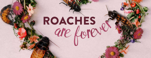 Bronx Zoo Name A Roach Madagascar Hissing Cockroaches for Valentine's Day 2017