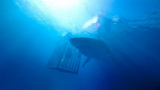 In 47 Meters Down, Lisa (Mandy Moore) and Kate (Claire Holt) get up close and personal with sharks while cage diving in Mexico