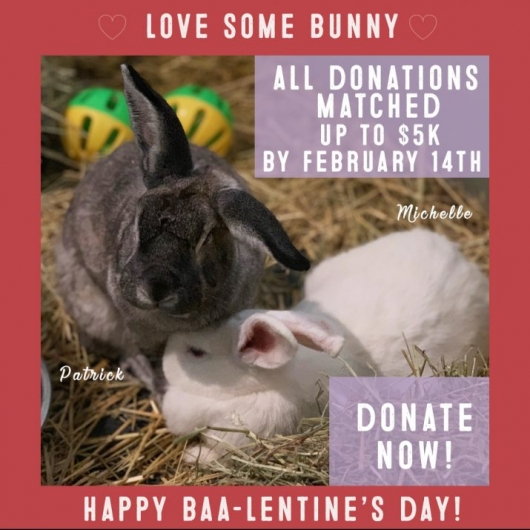 Woodstock Farm Sanctuary Valentine's Day 2019