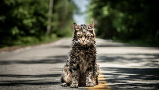Pet Sematary cat Church 2019