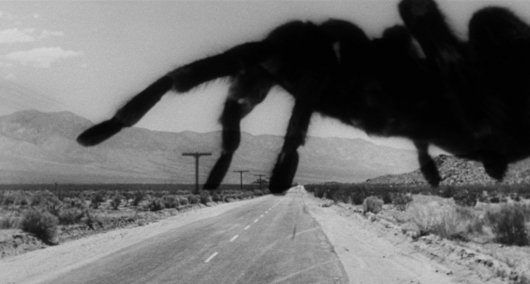 Blu-ray Review: Scream Factory's Tarantula!